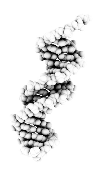 Double Helix of DNA