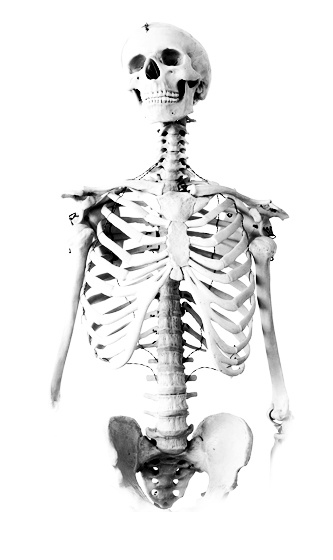 Skeleton and the History of Anatomy